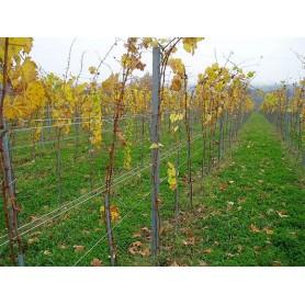 Redni stup za vinograd-v 2500 mm